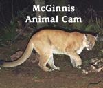 McGinnis Animal Cam