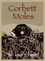 Corbett Moles, WE LOVE IT HERE